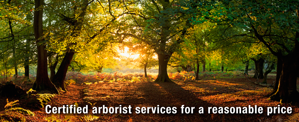 Certified arborist services for a reasonable price